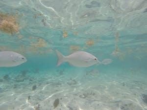 sky reef cozumel