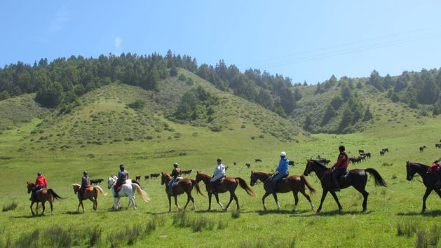 Horseback riding across cattle ranch in Fort Bragg