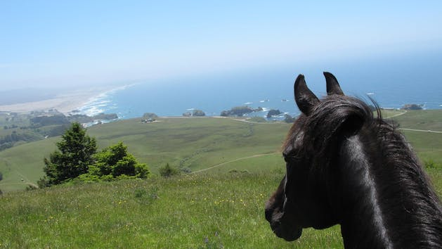 Mendocino Coast horseback riding