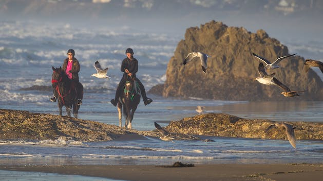 Horseback riding on the beach in Northern California