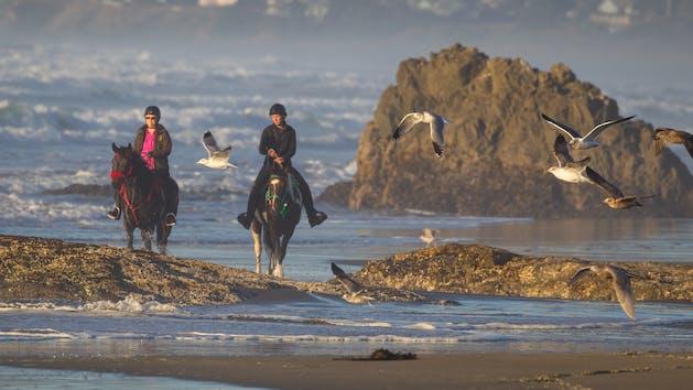 Horseback riding on the beach in Northern California