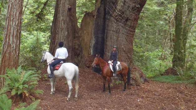 Horseback riding through California's redwood forests