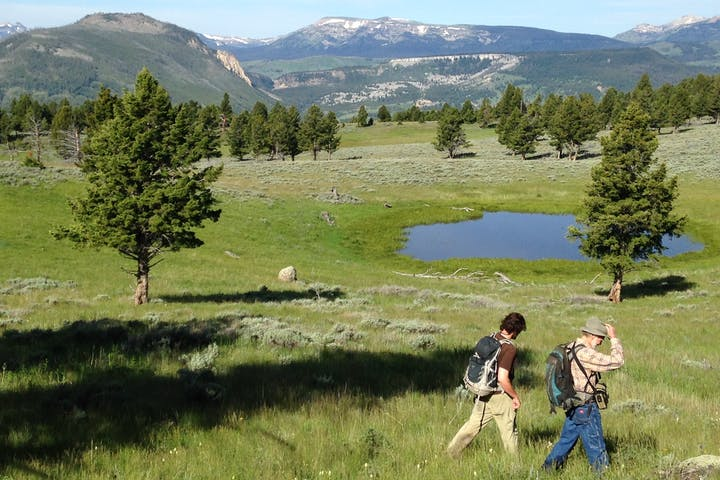 Two people walking across green meadow in Yellowstone National park