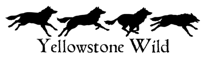 Yellowstone Wild Tours