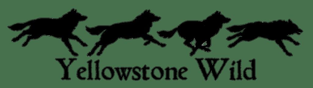Yellowstone Wild Tours Yellowstone Wildlife Animal Tours