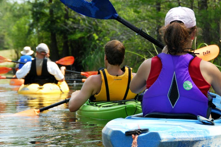 A line kayakers among plants