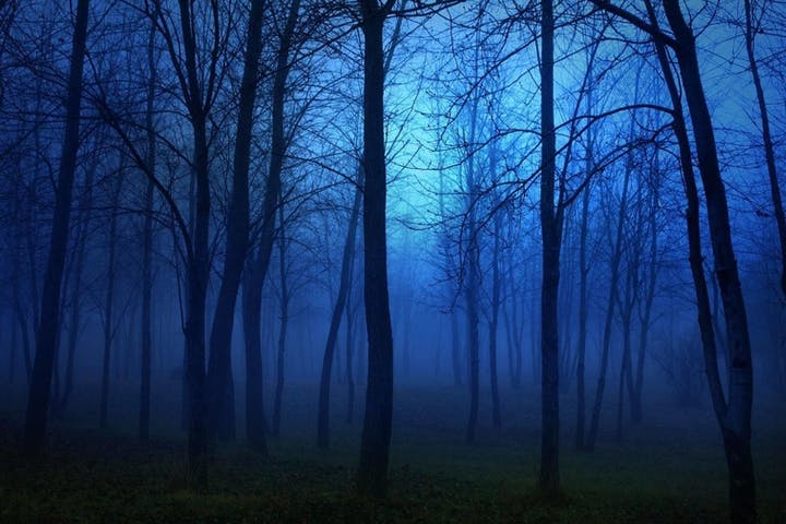 haunted blue forest