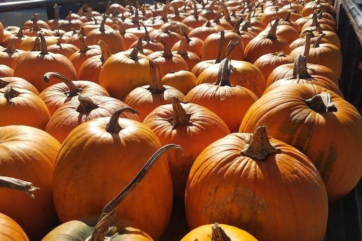 Pumpkins on train