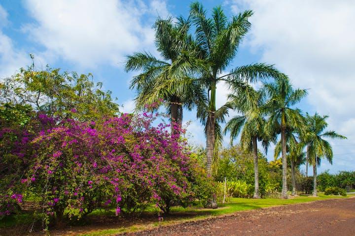 hawaii World Botanical Gardens