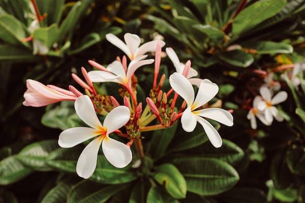 Suggestions Botanical World Adventures