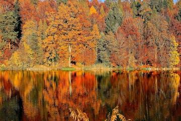 autumn trees on water