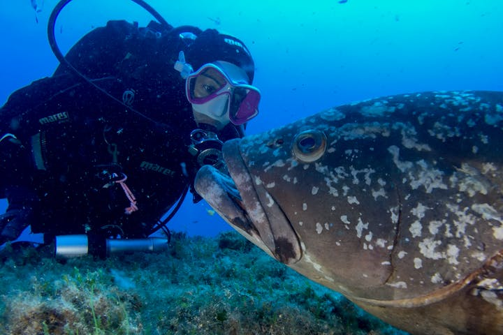 A diver with a big fish
