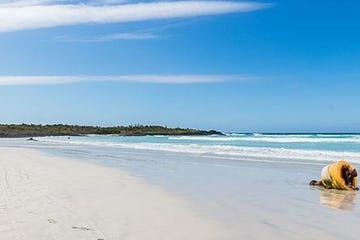 A beach in the Galapagos Islands