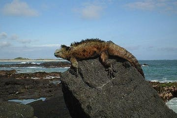 A lizard relaxing on a rock in the sun
