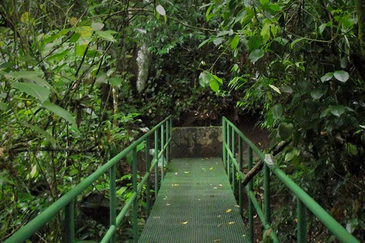 green walk ramp in forest in the park