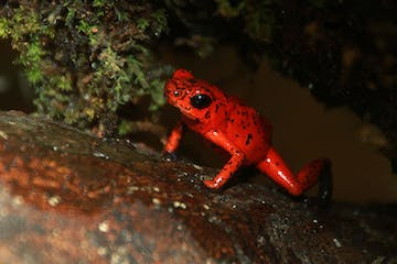 red frog on top of a log