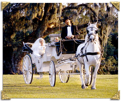 Palmetto Carriage 23