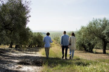Visitors walking on an olive oil field