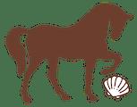 Shackleford Banks Shelling & Wild Horse Expedition
