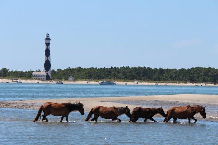 wild horses in ocean