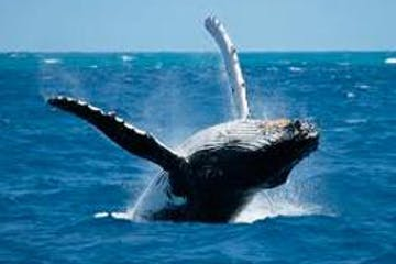 whale on water