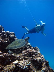 SNUBA diver swimming past sea turtle