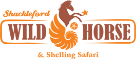 Shackleford Wild Horse and Shelling Safari