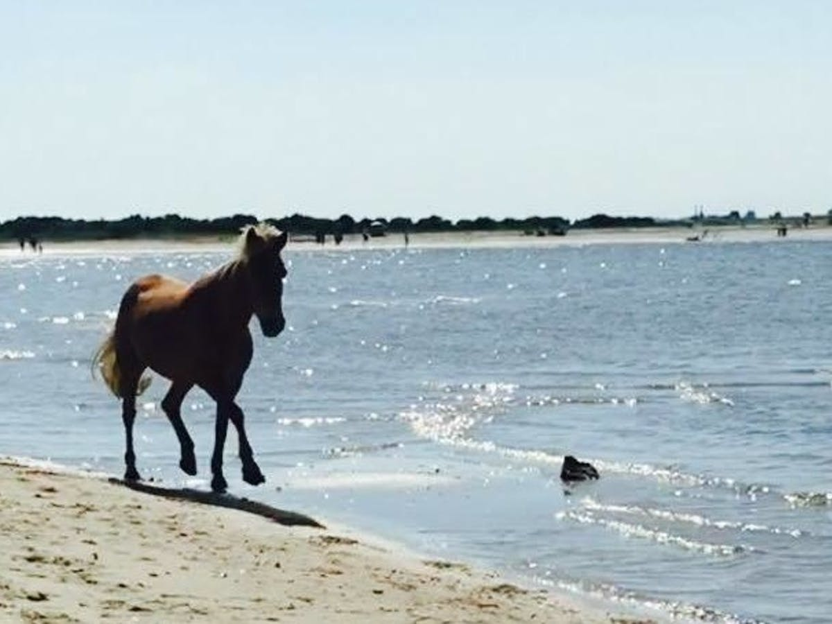 wild horse on shore