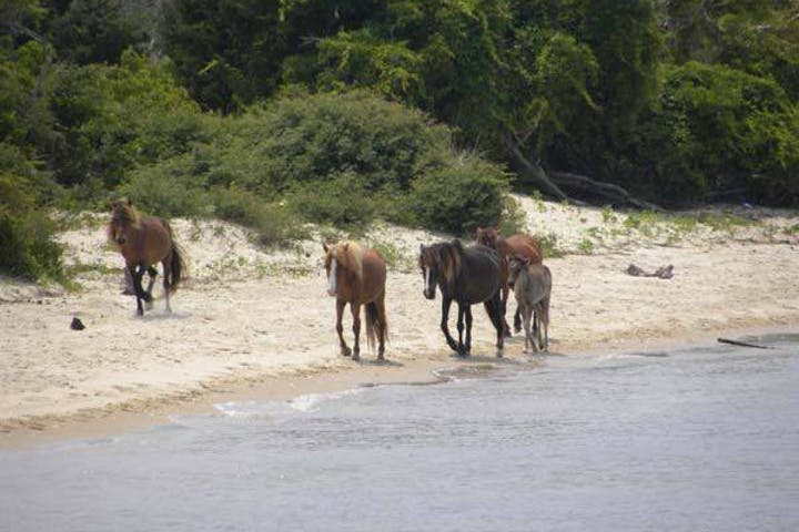 wild horses at Beaufort shore