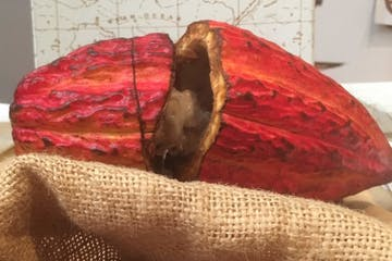 cocoa pod and cacao beans