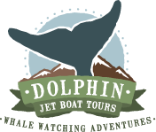 Dolphin Jet Boat Tours