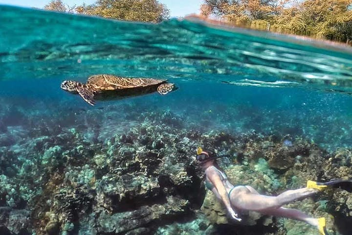 Women snorkeling underwater with sea turtle above her