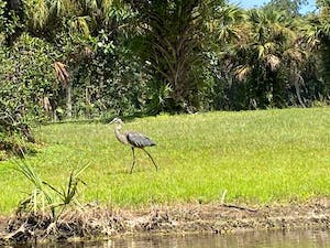 a bird that is standing in the grass next to a body of water