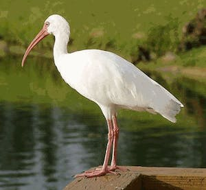 a bird standing in front of a body of water