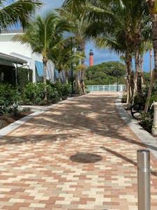 a palm tree on a sidewalk