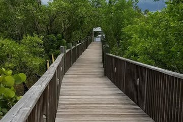 Long wooden bridge