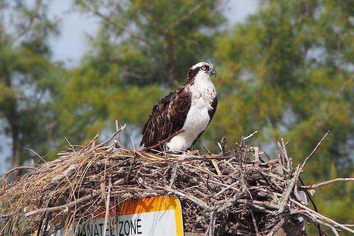 Small bird in it's nest
