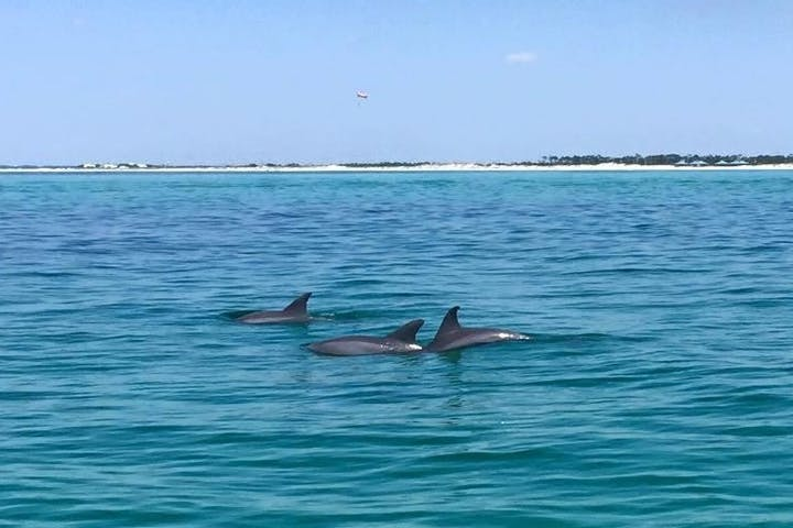 Dolphins swimming on top of blue water