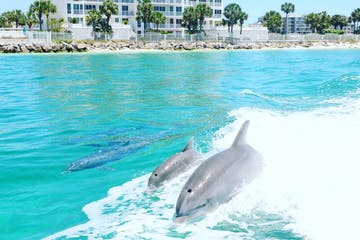 Dolphins in the boat wake