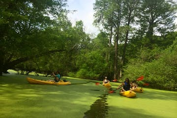People kayaking in a swamp near New Orleans