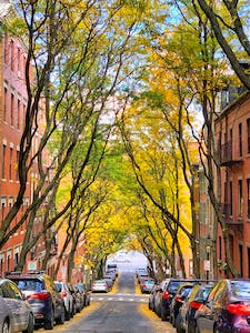 a car parked on a city street lined with trees