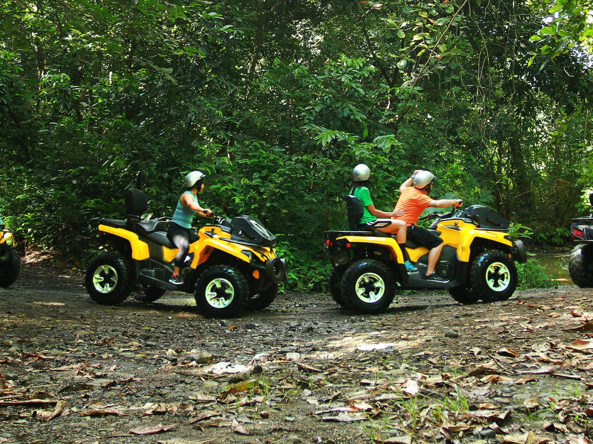People driving ATVs through the forest