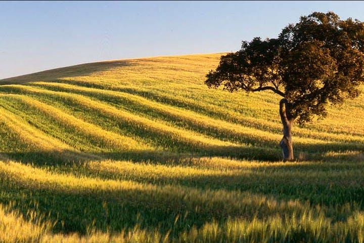 Alentej landscape in Portugal