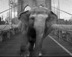 a elephant that is standing in the street