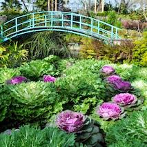 Winter Tea House Gardens