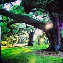 Oaks in Sunset