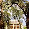Mansion with Oaks