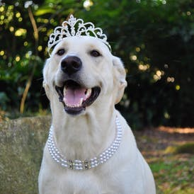 Maggie Wearing Crown