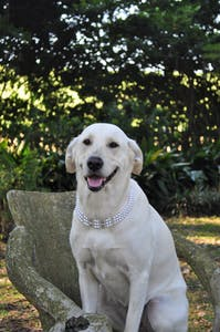 Maggie in Pearls