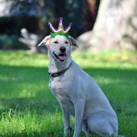 Maggie with Crown